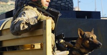 Conratulations to Acting Lion Ramon Rodriguez starring in MEGAN LEAVEY  with Kate Mara